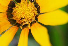 Διψασμένο μυρμήγκι Στοκ εικόνα με δικαίωμα ελεύθερης χρήσης