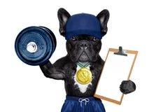 Δραστήριο αθλητικό σκυλί Στοκ Φωτογραφίες