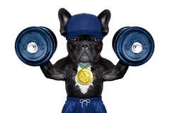 Δραστήριο αθλητικό σκυλί Στοκ Εικόνες