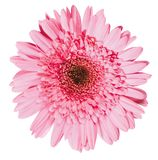 Δροσερό λουλούδι άνοιξη - 6 Στοκ Φωτογραφίες