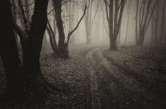 Δρόμος σε ένα σκοτεινό δάσος με την ομίχλη σε αποκριές Στοκ Εικόνες