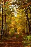 δρόμος φθινοπώρου Στοκ εικόνα με δικαίωμα ελεύθερης χρήσης