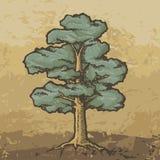 Δρύινο σκίτσο δέντρων Στοκ Εικόνα