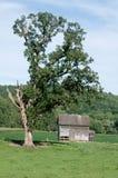 δρύινο δέντρο κάτω Στοκ Εικόνες