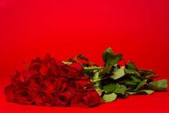 Δωδεκάα κόκκινα τριαντάφυλλα σε ένα κόκκινο υπόβαθρο Στοκ Φωτογραφία