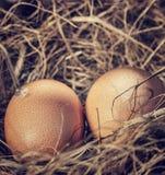 Δύο ακατέργαστα αυγά στη φωλιά Στοκ φωτογραφία με δικαίωμα ελεύθερης χρήσης
