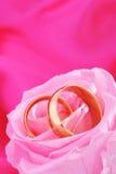 Δύο δαχτυλίδια με αυξήθηκαν Στοκ φωτογραφίες με δικαίωμα ελεύθερης χρήσης