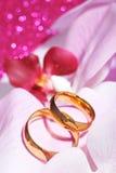 Δύο δαχτυλίδια με τα orchis Στοκ Φωτογραφία