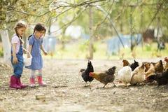Δύο ταΐζοντας κοτόπουλα μικρών κοριτσιών Στοκ Φωτογραφία