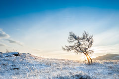 Δύο όμορφα δέντρα στα βουνά στο ηλιοβασίλεμα Στοκ εικόνα με δικαίωμα ελεύθερης χρήσης