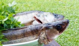 Δύο walleye στον πίνακα Στοκ εικόνα με δικαίωμα ελεύθερης χρήσης
