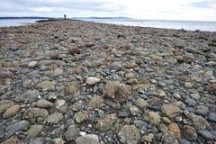 δύση ακτών του Καναδά Στοκ εικόνες με δικαίωμα ελεύθερης χρήσης