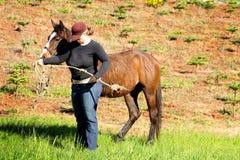Дама Тренировка Молод Лошадь Стоковое Изображение