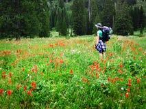 Девушка женщины укладывая рюкзак при Wildflowers принимая фотоснимок Стоковое Изображение