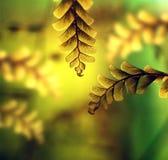 девушка листьев волос папоротника Стоковое Изображение RF