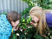 Девушки есть зрелую поленику от куста Стоковая Фотография