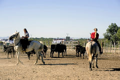 Девушки Gardians работая табун быков Стоковые Изображения RF