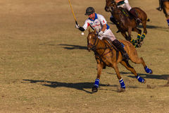 Действие игры лошадей всадников поло Стоковое фото RF