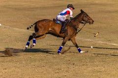 Действие игры лошадей всадников поло Стоковое Изображение