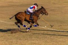 Действие игры лошадей всадников поло Стоковая Фотография