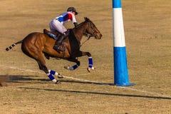 Действие игры лошадей всадников поло Стоковые Фото