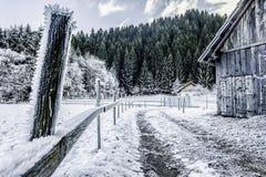 Действительно холодная зима Стоковая Фотография