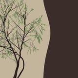 Декоративное дерево вербы рамки вектора дизайна Стоковое Изображение RF
