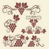 Элементы лозы виноградины Стоковые Фотографии RF