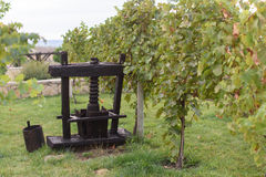 Декоративный Masher в винограднике Стоковое Изображение RF