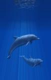 дельфины под водой Стоковое Изображение