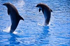 дельфины Стоковое Изображение