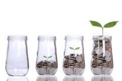 Деньги растя с концепцией дерева растущей Стоковые Изображения RF