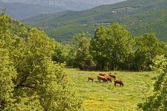 Деревенский пейзаж на горах Pindos в Греции Стоковые Изображения