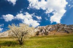 Дерево весны под горами Стоковые Изображения RF