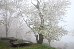 Дерево вишневого цвета Стоковое Изображение RF