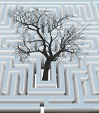 Дерево в лабиринте Стоковое Фото