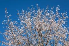 Дерево в белом заморозке Стоковое Изображение