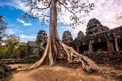 Дерево в животиках Phrom, Angkor Wat, Камбодже Стоковые Фотографии RF