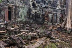 Дерево в животиках Phrom, Angkor Wat, Камбодже Стоковая Фотография