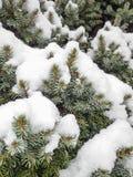Дерево в зиме Стоковая Фотография RF