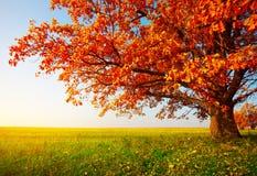 Дерево в осени Стоковое Изображение RF