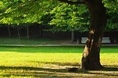 Дерево в парке Стоковые Фото