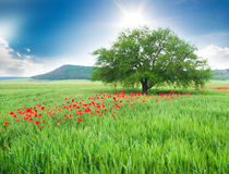 Дерево в поле и полевых цветках. Стоковое фото RF