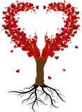 Дерево влюбленности Стоковые Фото