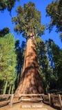 Дерево генерала Шермана Стоковые Изображения