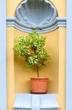 Дерево лимона Стоковые Фото