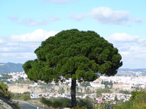 Дерево и деревня Стоковое Изображение
