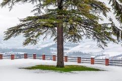 Дерево на лужайке покрытой с снегом Стоковое Изображение