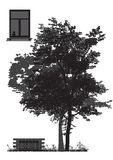 Дерево перед домом Стоковая Фотография