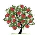 Дерево рябины с ягодами для вашего дизайна Стоковое фото RF
